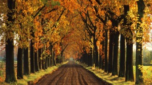 Tree-Lined Lane in Autumn, Holland